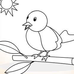Colorir pássaro