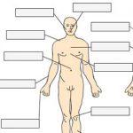 Complete o corpo humano