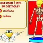 Descubra o osso