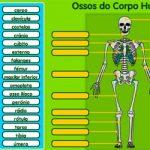 Os ossos II