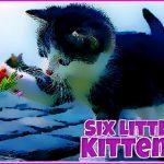 Seis gatinhos